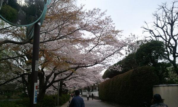 2011-04-08a.jpg
