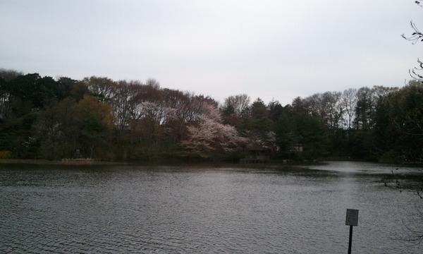 2011-04-08b .jpg