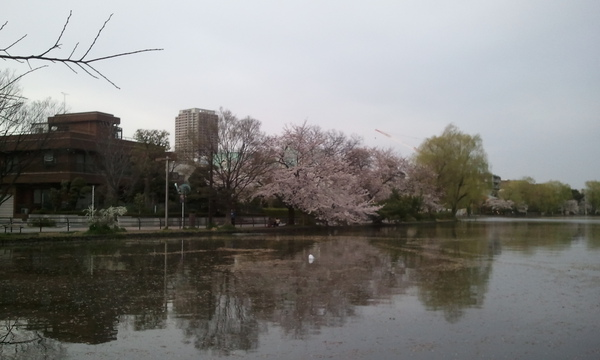 2011-04-08c.jpg